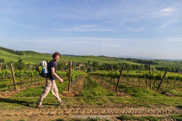 Hiking through wine fields